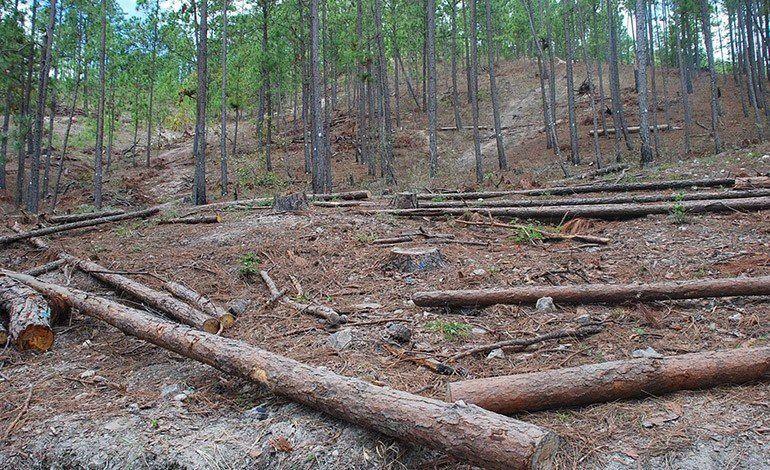 la-politica-forestal