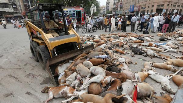 700 perros vagabundos son envenenados en Pakistán