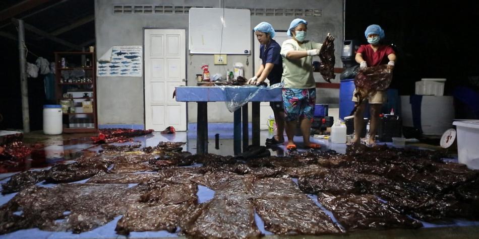 El suceso ocurrió en Tailandia, donde el cetáceo expulsó cinco bolsas entre espasmos antes de morir