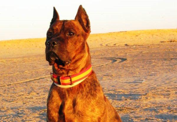Miles de españoles salen en defensa de Curro, el perro que será sacrificado por defender su casa de un ladrón