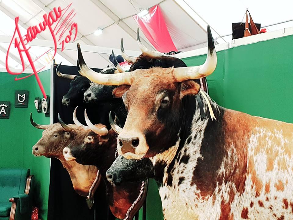 Visto en la Feria del Toro de Olivenza. Por Manuel Barragán Lancharro