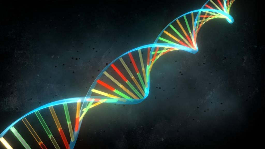 En 1953, James Watson y Francis Crick, propusieron asignar una estructura de doble hélice a la molécula de ADN