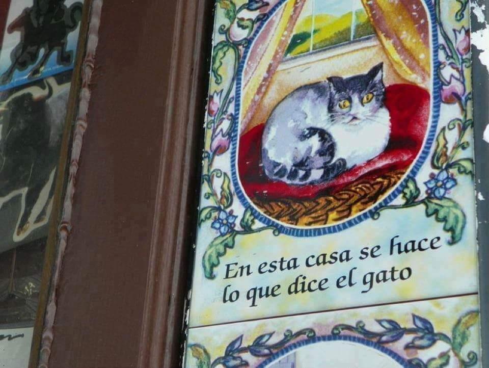 Y hablando de Madrid y los gatos